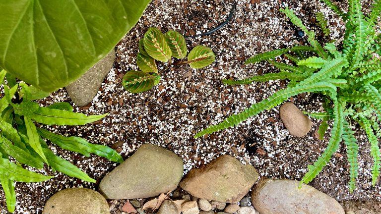 Plantas tropicales en suelo