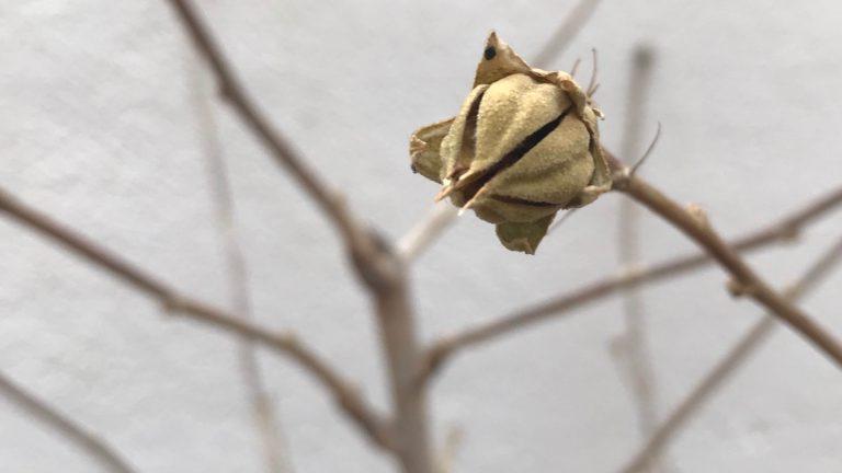 Las plantas y el frío